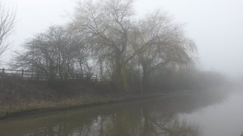 foggywillow